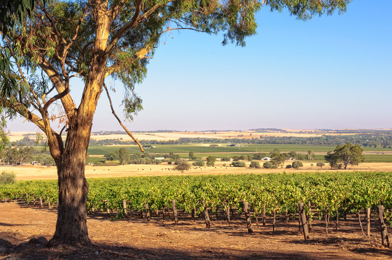 Take a Tour of Barossa Through the Seasons
