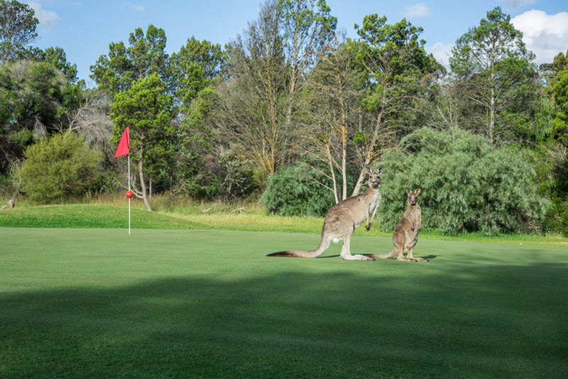 Barossa Golf Courses – the perfect way to spend a day